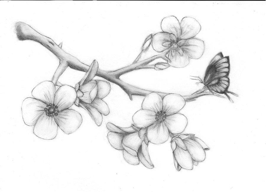 активно распускающийся цветок картинки карандашом минусов, конечно