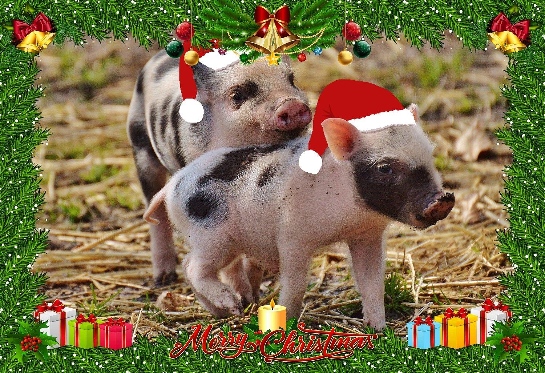 продаже фото свиней поздравления стрижка