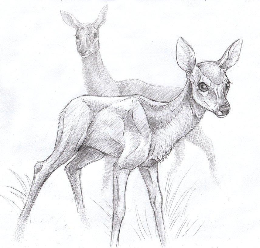 Картинки рисунки оленей пошагово