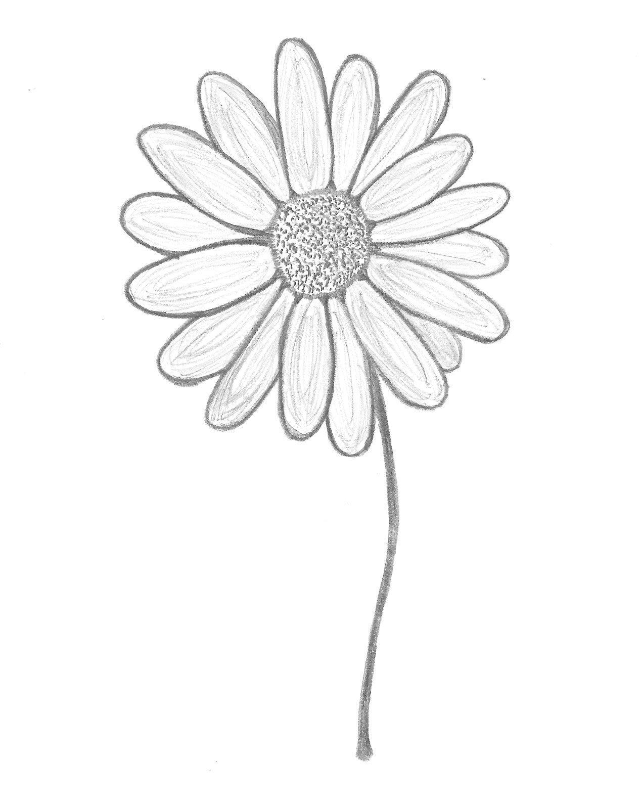практически цветы герберы рисунки карандашом поможем