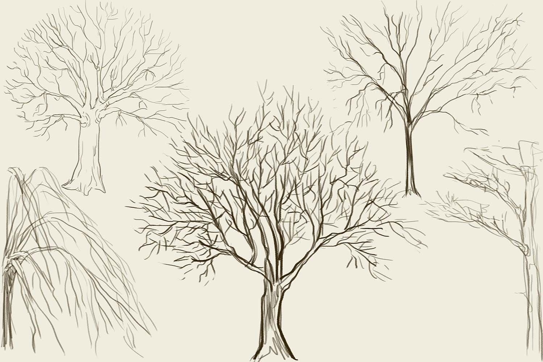 Картинки рисовать карандашом деревья