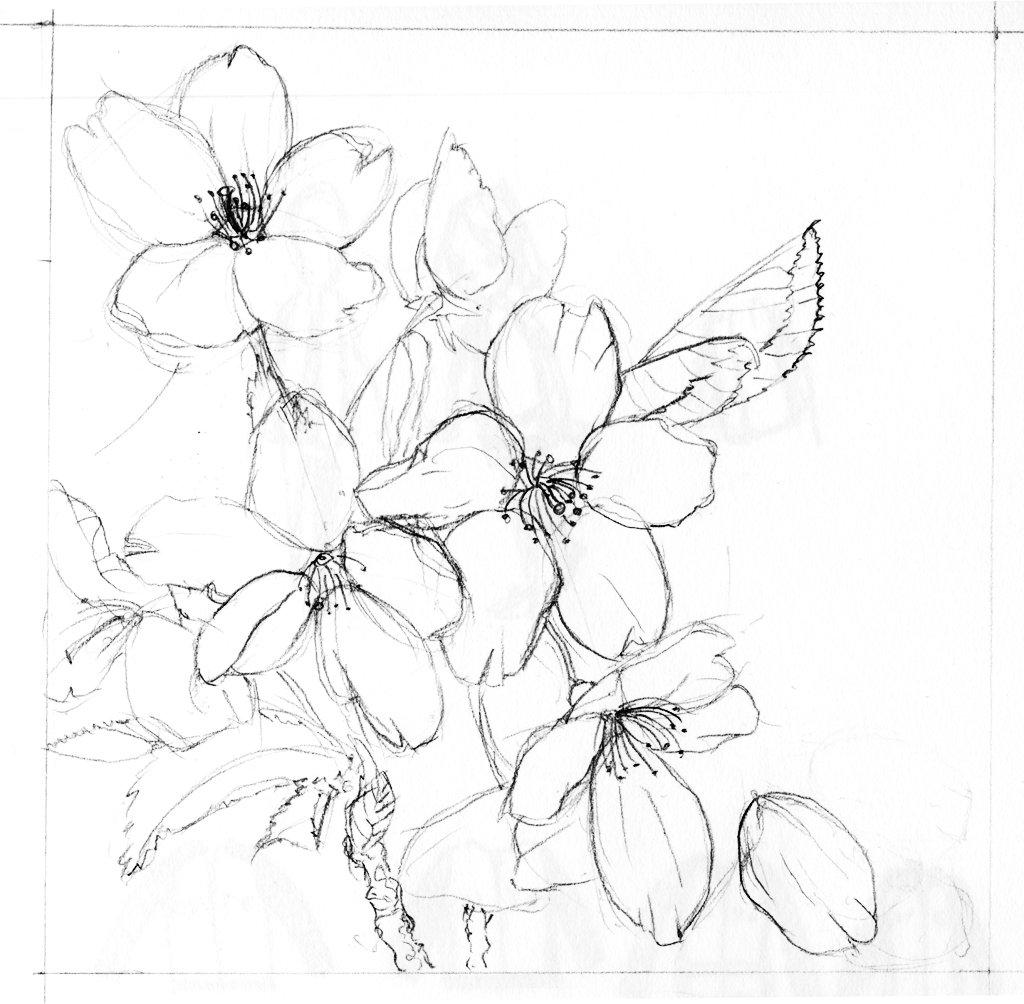 лодыгин, распускающийся цветок картинки карандашом три дня