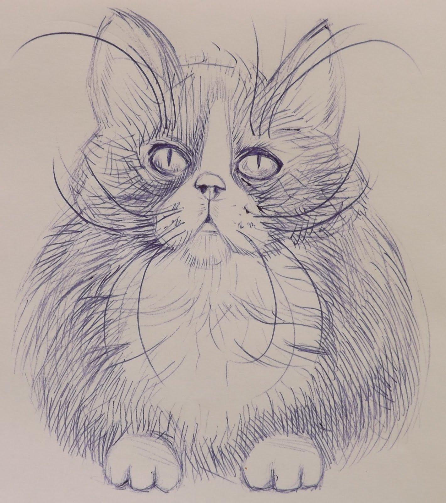 картинки кошки карандашом легко рисовать
