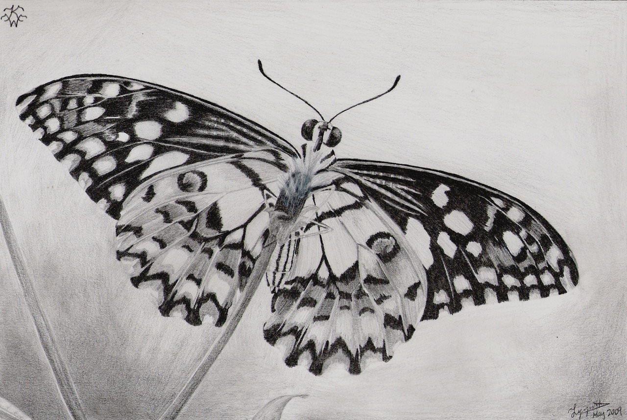 Сделать, бабочки рисунки карандашом картинки