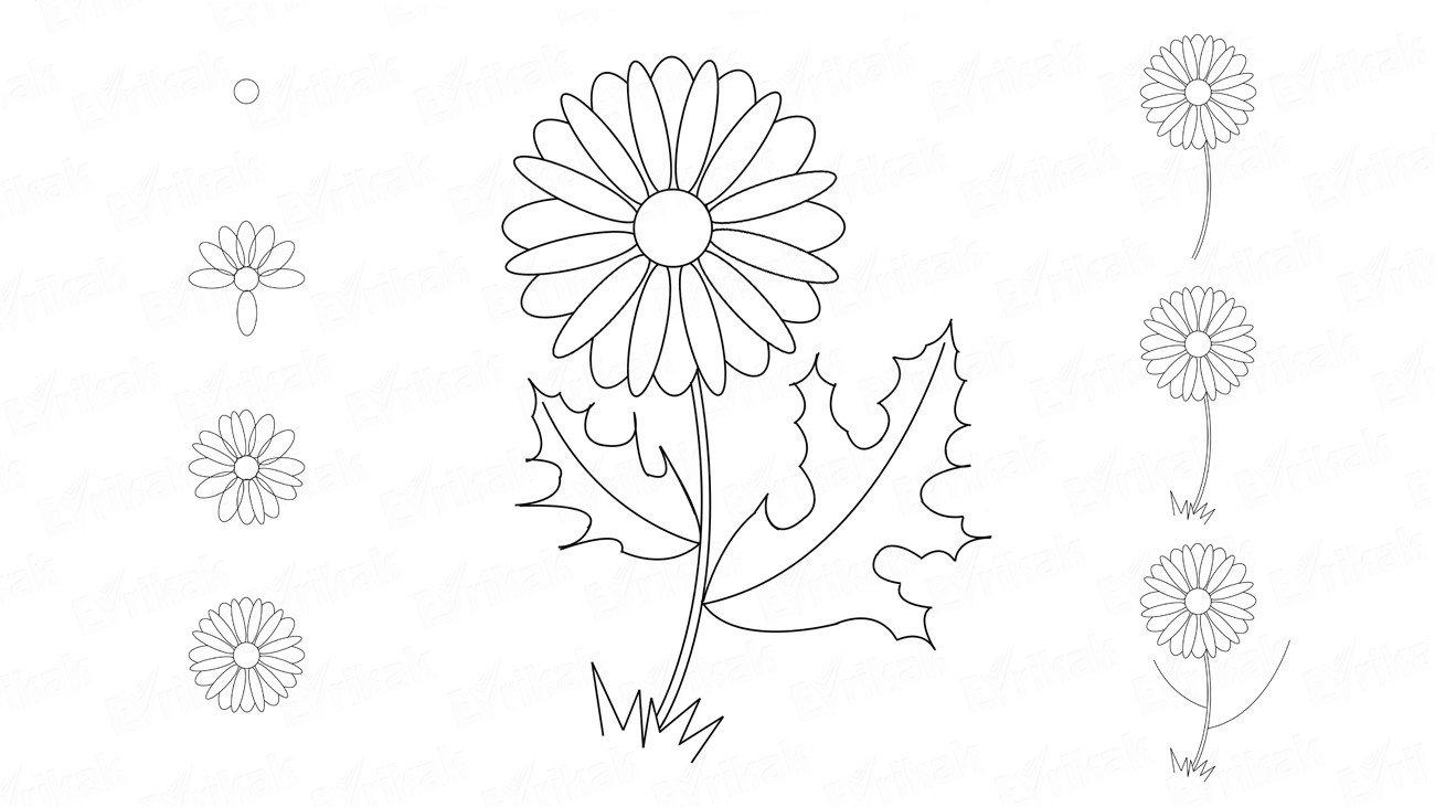 Прикол, ромашки рисунок карандашом
