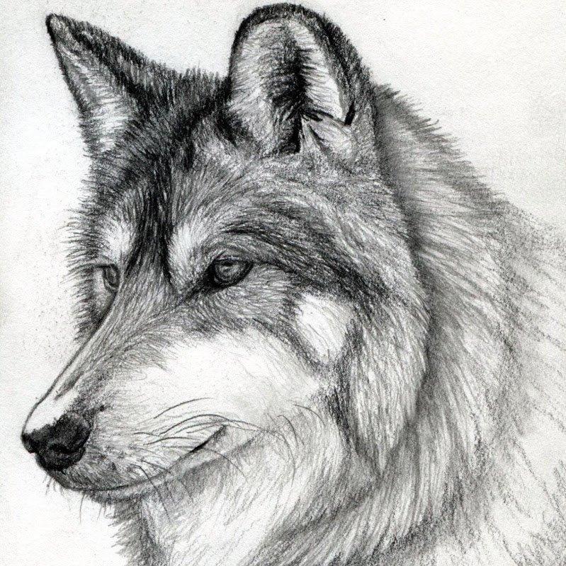 Картинки которые нарисованы карандашом животные