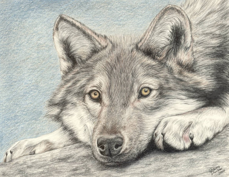 Картинки, рисунок с волками