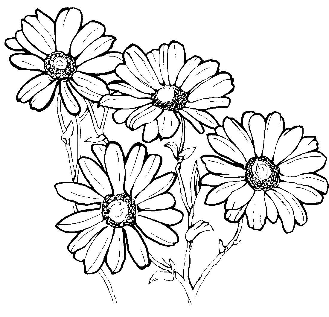 Ромашка черно белый рисунок