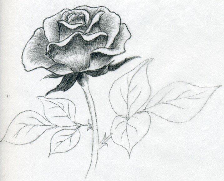 Рисунки карандашом легкие и красивые для девочек