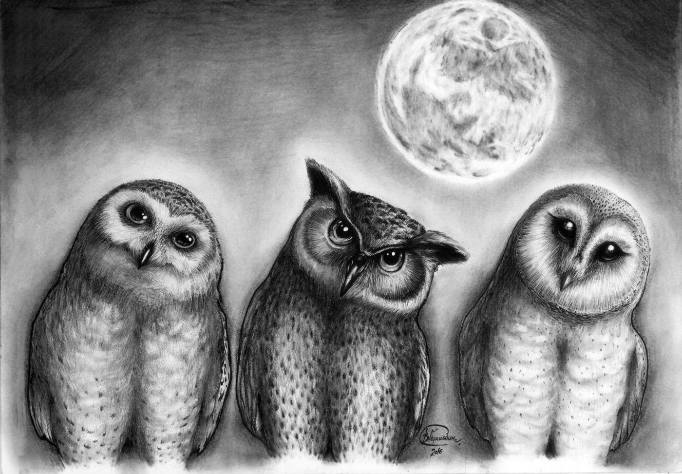 рисунки филина и совы звонить телефону сне