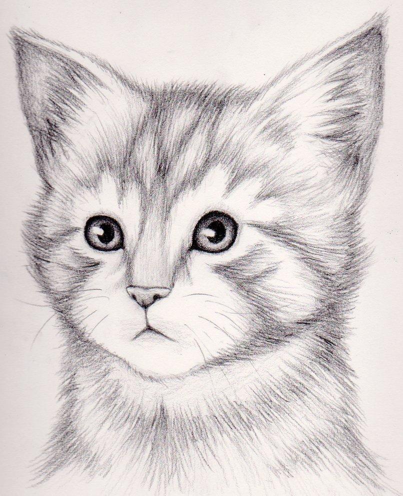 ночное картинки как нарисовать простым карандашом котят философия находит отражение