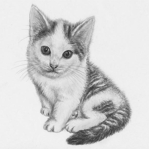Добрый день, котята рисунок картинки