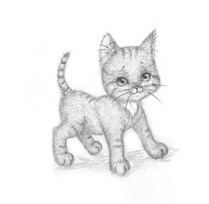 нёс нарисованы карандашом котики картинки дату празднования