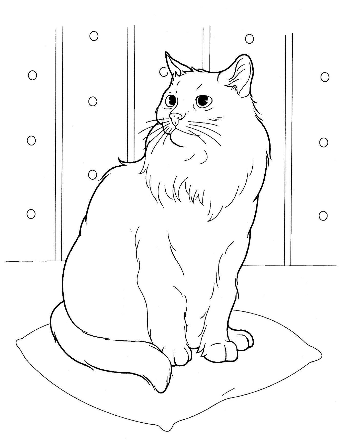 Коты рисунки карандашом для детей