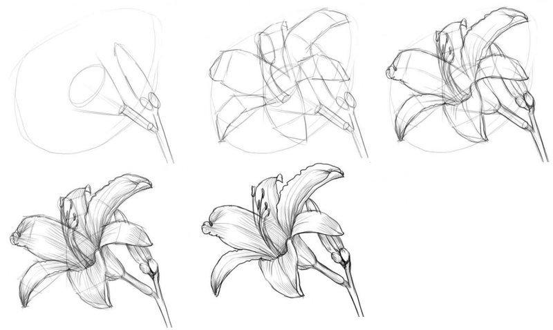 Картинки цветов для рисования карандашом для начинающих