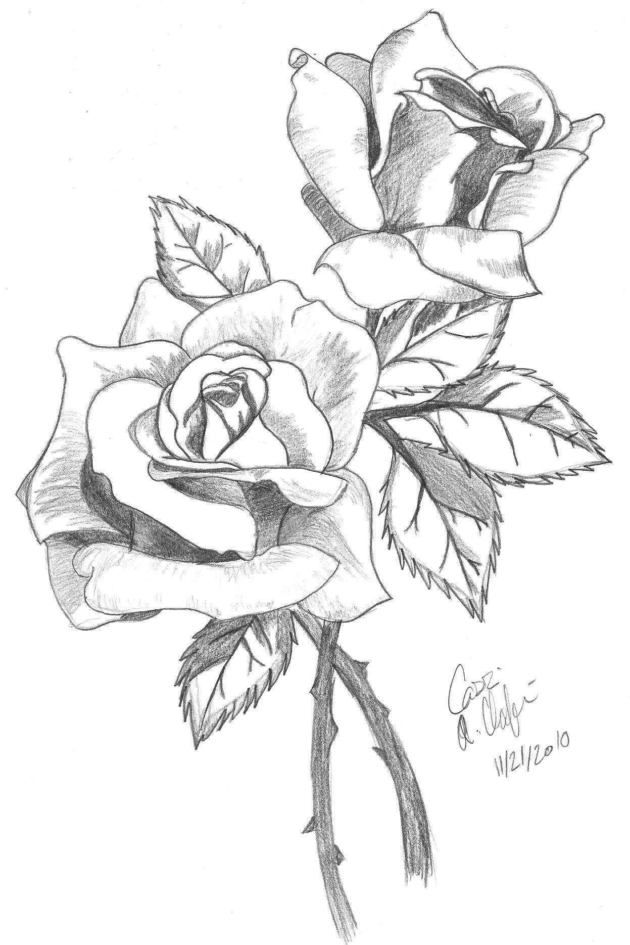 Картинки розы для срисовки, фаянсовую
