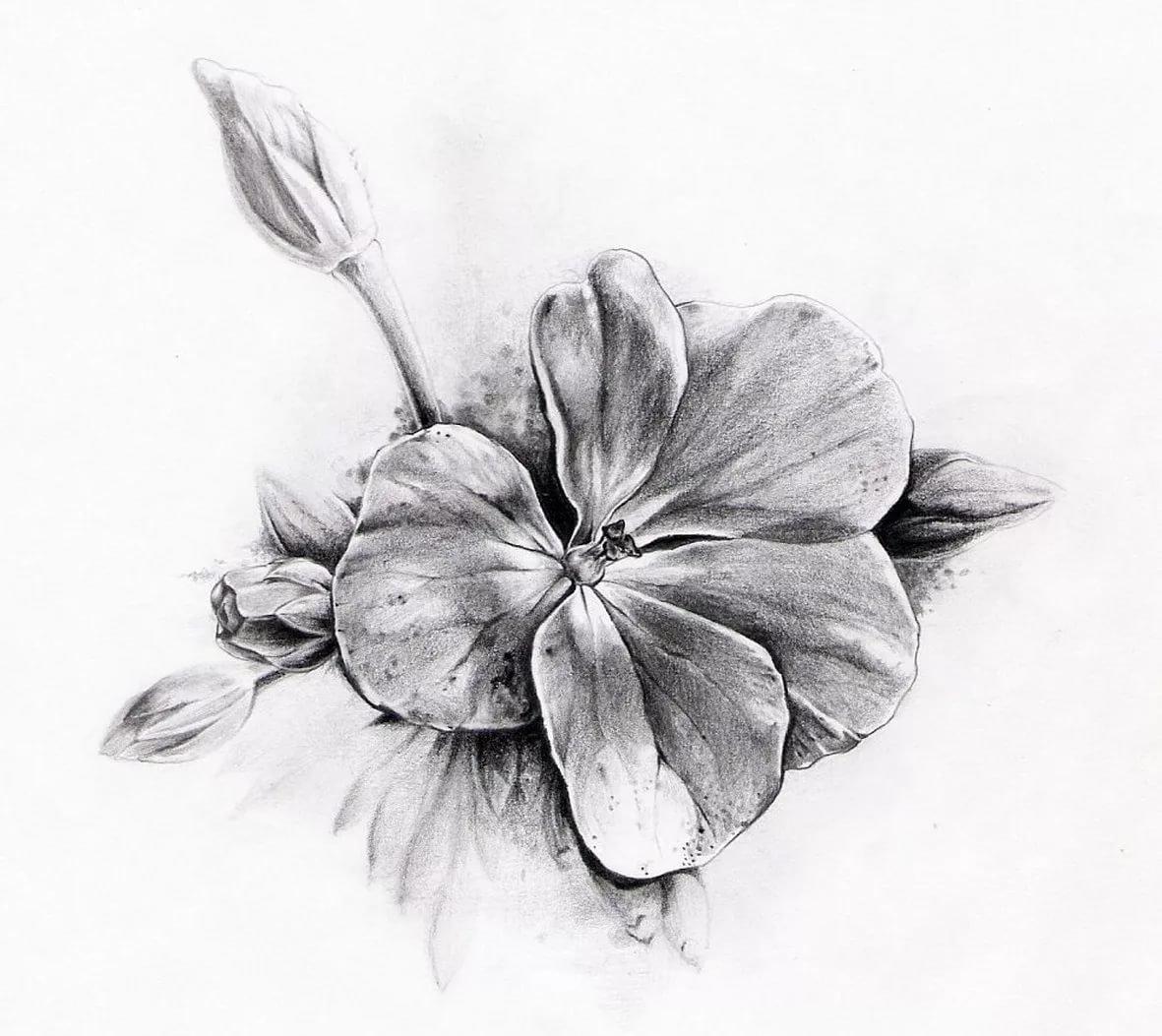 Открытки, картинки цветы на белом фоне нарисованные карандашом