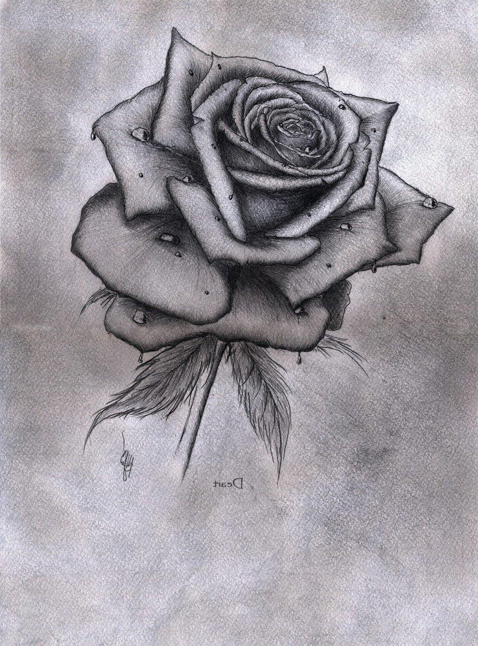 Розы рисунок карандашом картинки