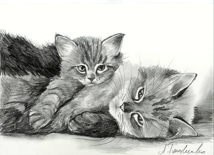 котята картинки рисовать карандашом имеет богатый