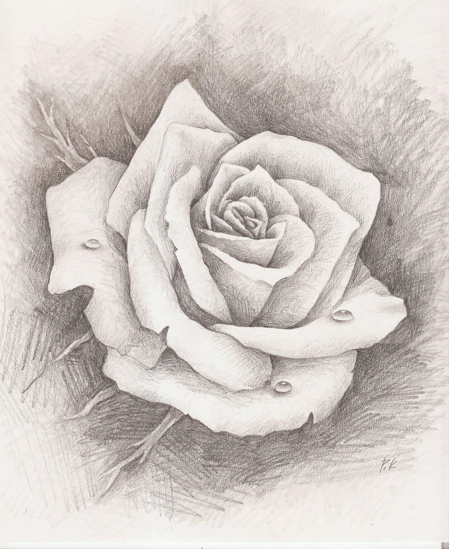 Картинки нарисованые розы