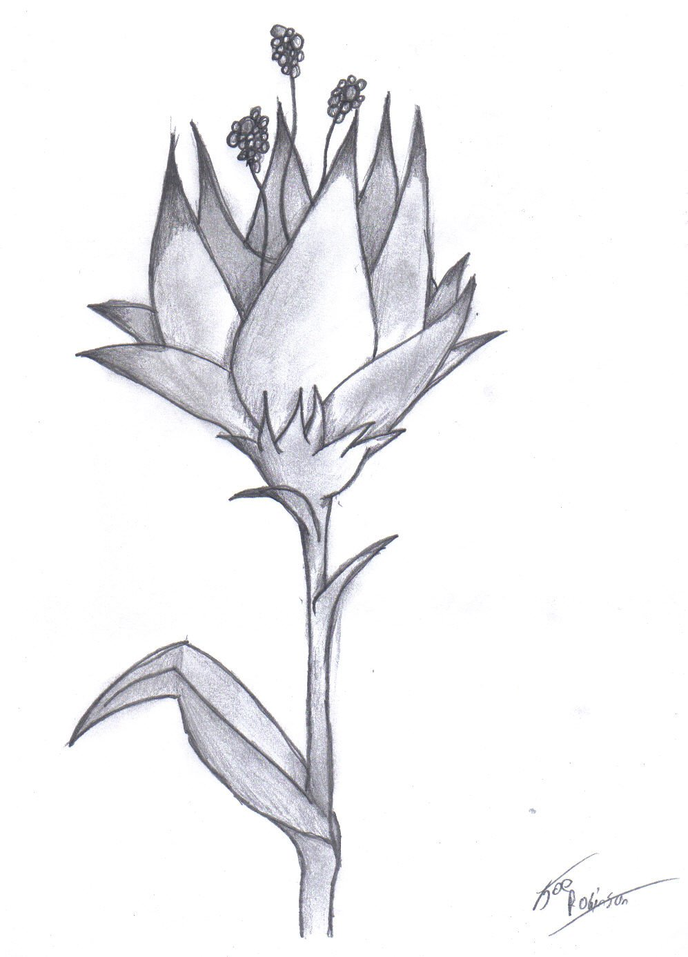 Картинки каменный цветок карандашом, рабочий стол
