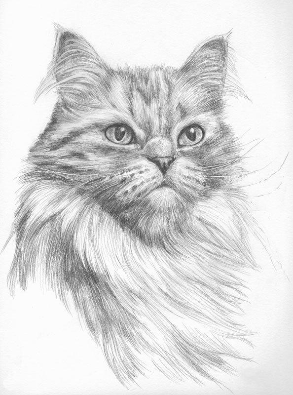 Кошки рисунок карандашом