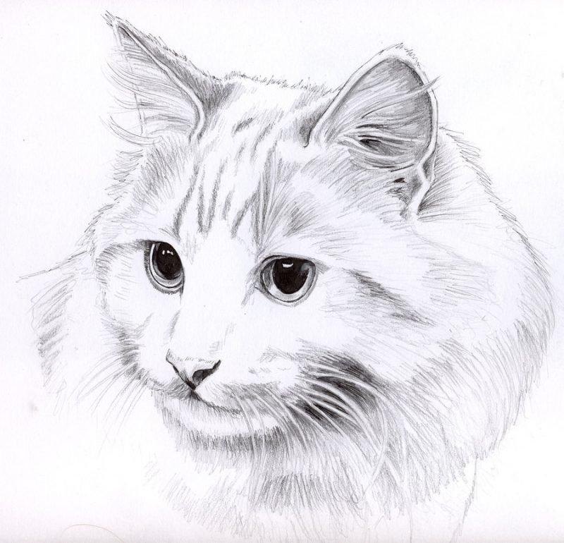 Легкие рисунки с котами