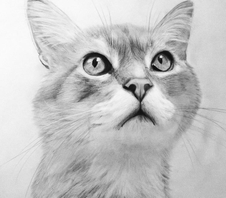 Картинки котов карандашом прикольные
