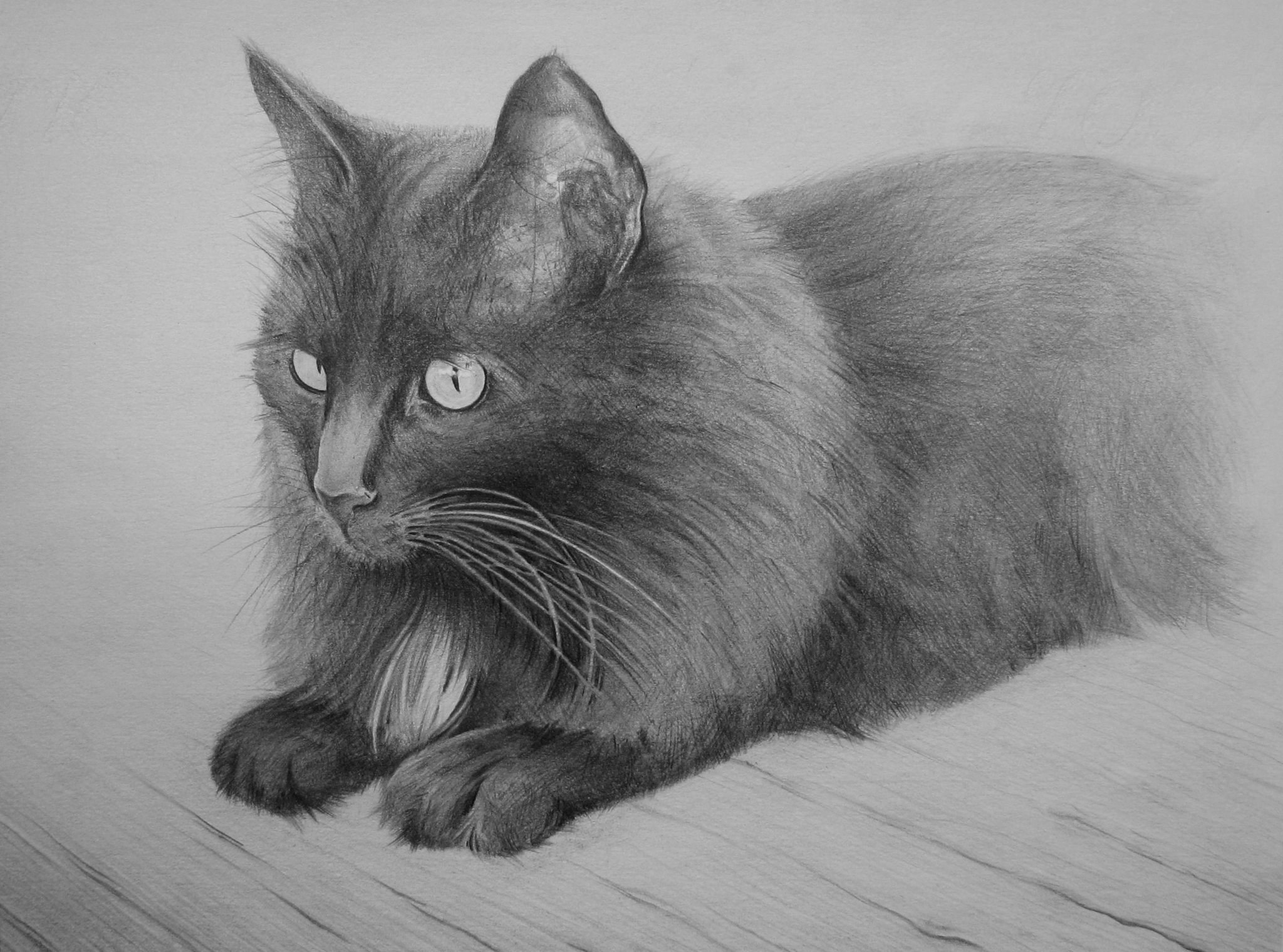 Фото рисунок кота, днем