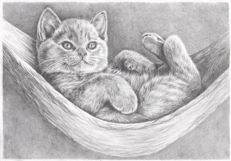 Рисунок карандашом котенка