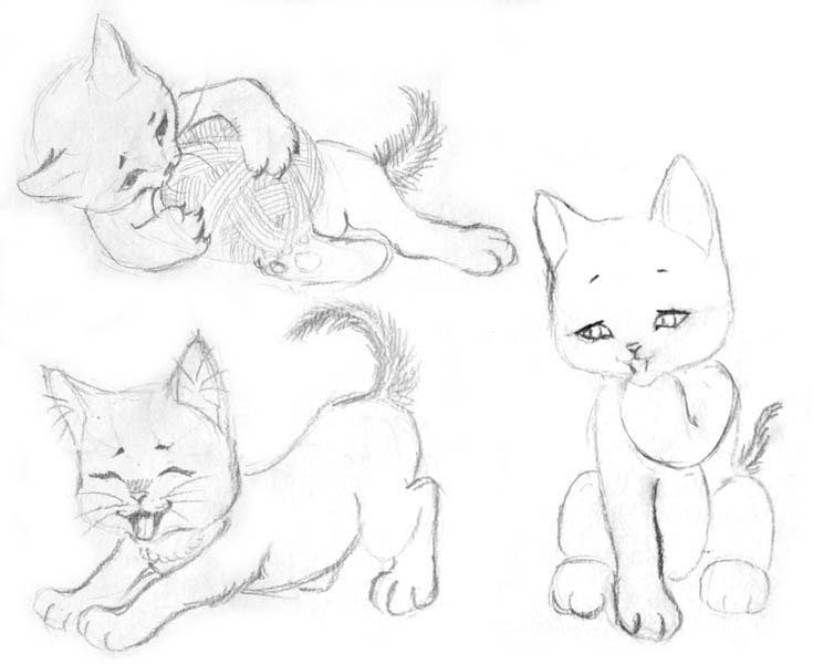 Поздравление, картинки котов для срисовки карандашом для начинающих