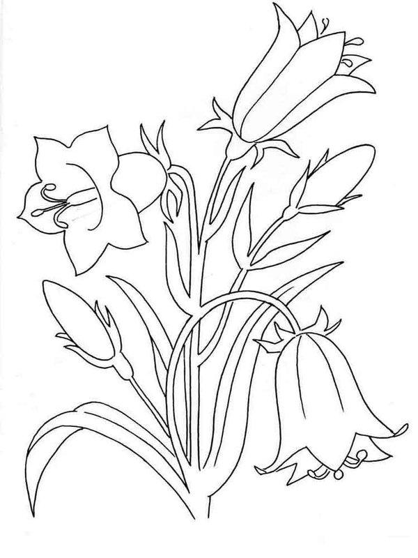 Цветок колокольчик карандашом