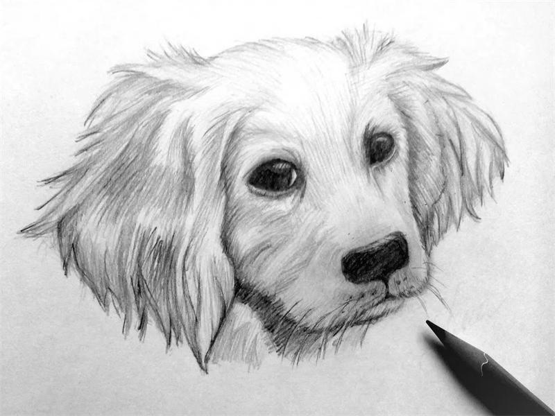 еще картинки рисования собак россии