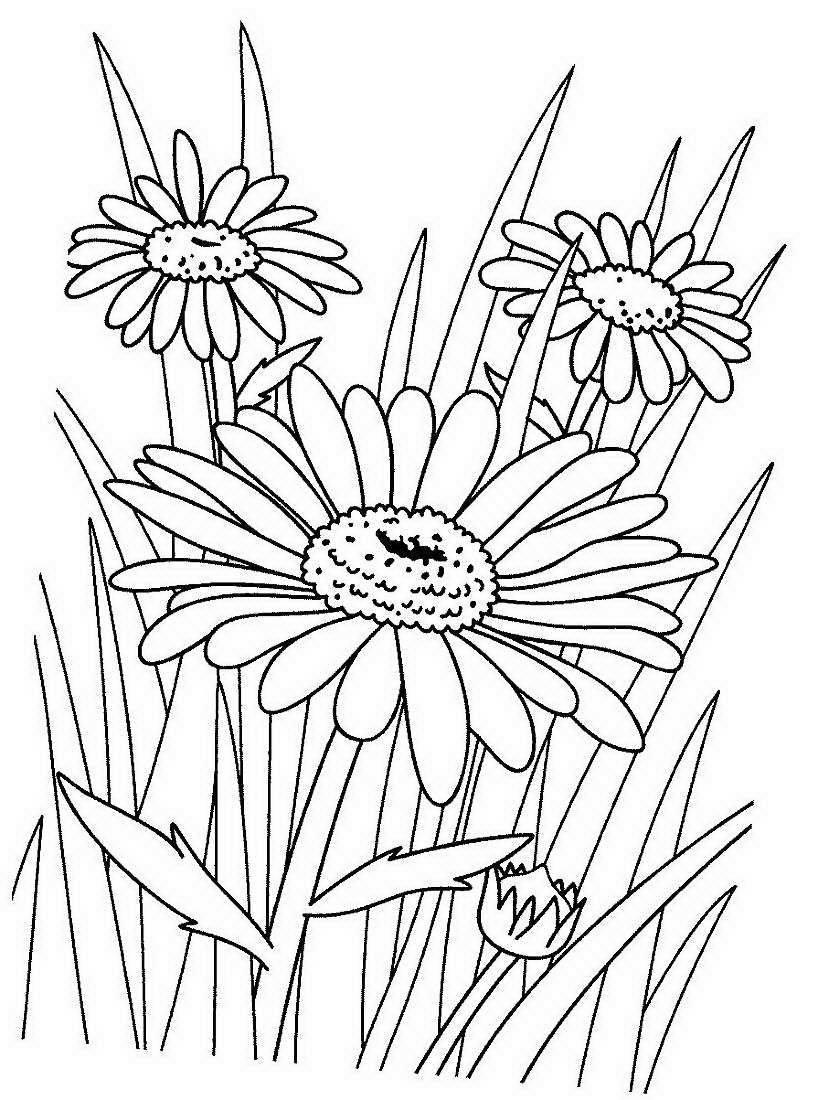 Картинки для детей ромашка раскраска