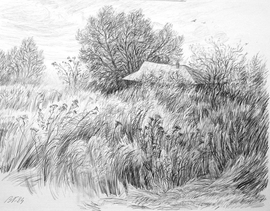 Нарисованные карандашом картинки о природе