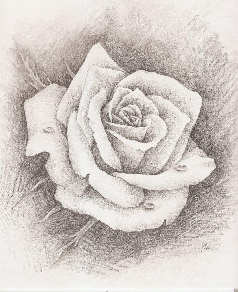 Простые красивые картинки нарисованные карандашом