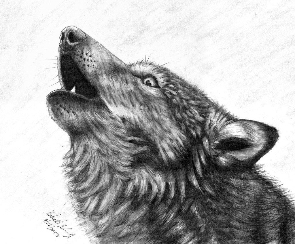 Волк в карандаше картинки
