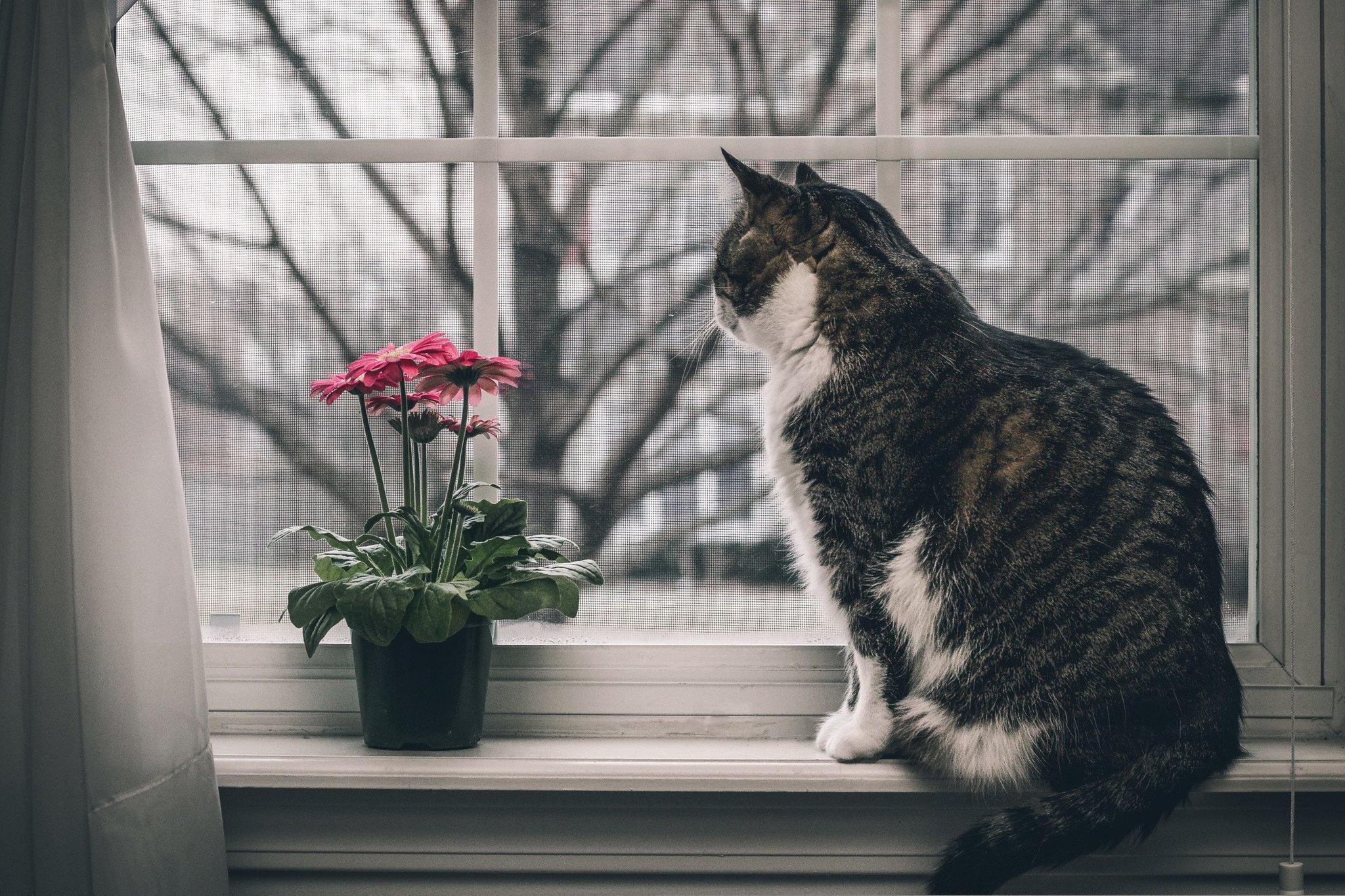 Картинки котики » пользователя vavri4ukVit