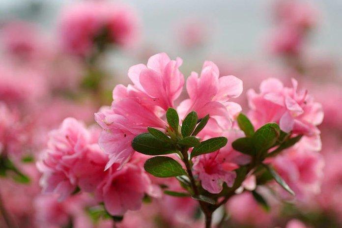 Букет роз в подарок на День Рождения