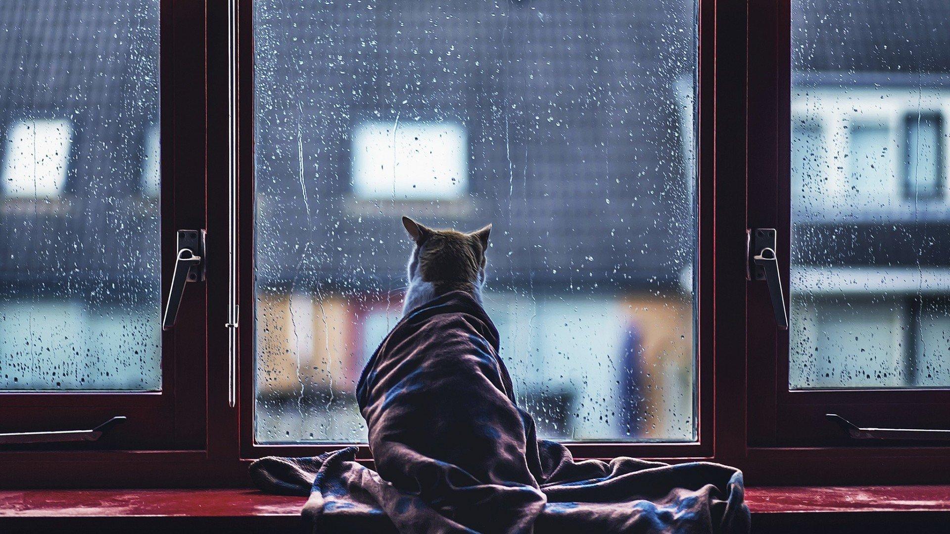 просмотра картинка грустит погода того