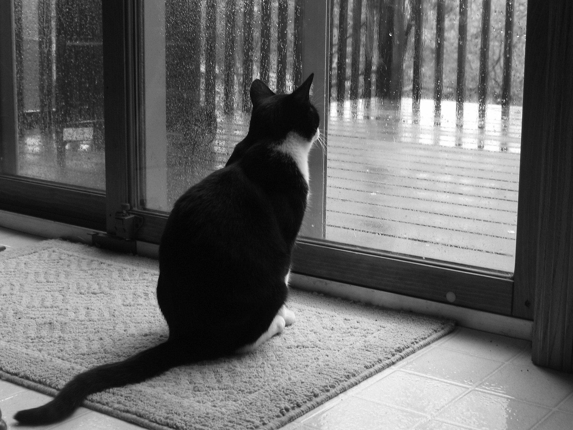 Картинки одиночество кошек