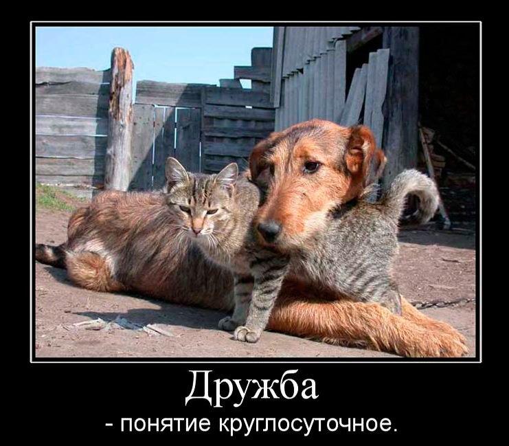 """Прикольные картинки """"с днем друзей"""""""