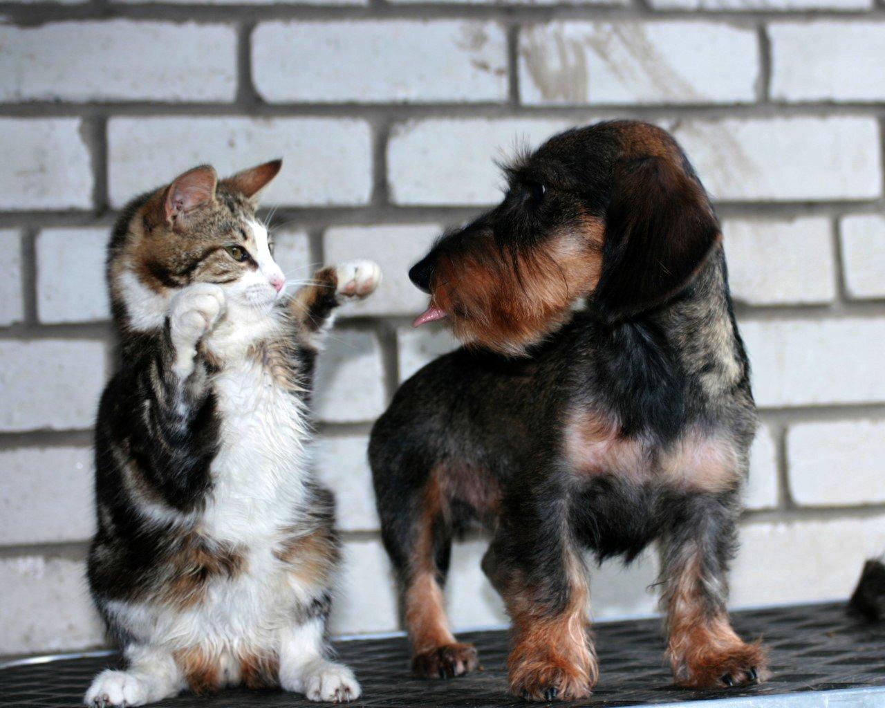 Прикольные картинки котов или собака