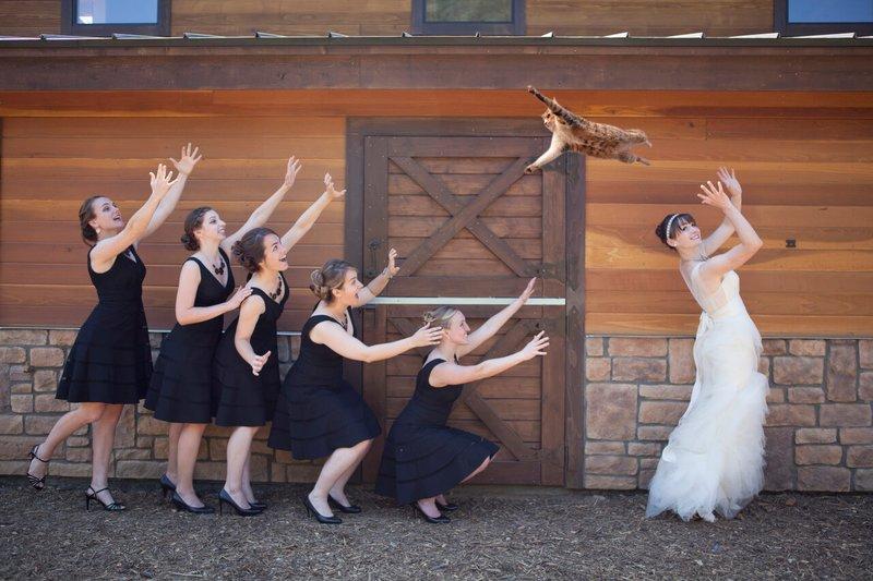 Невеста бросает подружкам кота