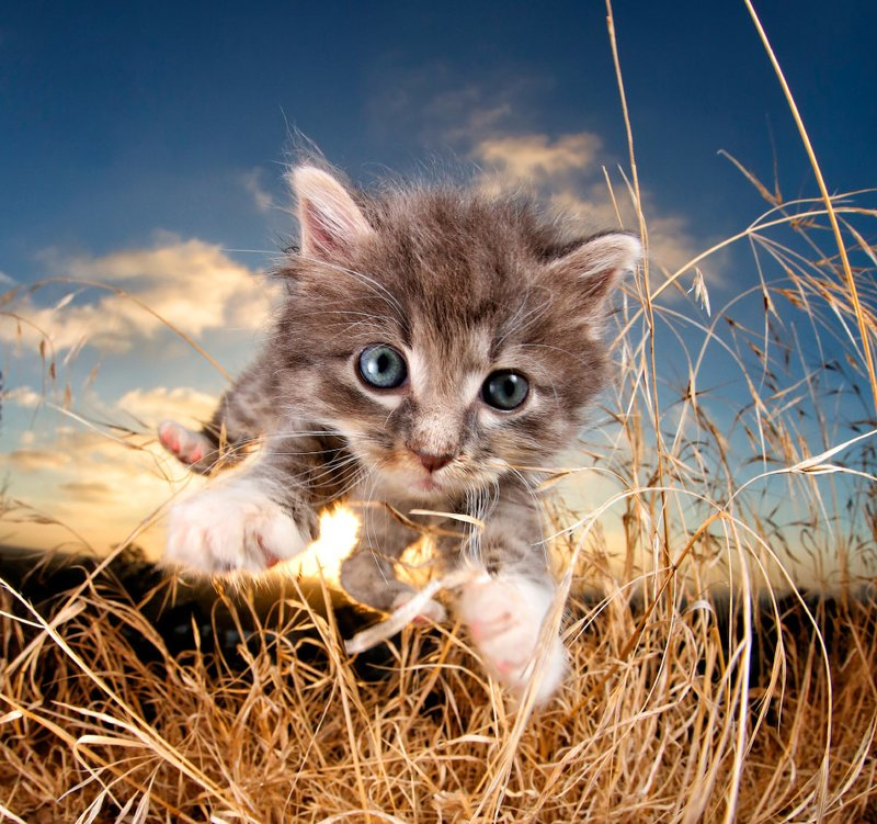 Котик в поле