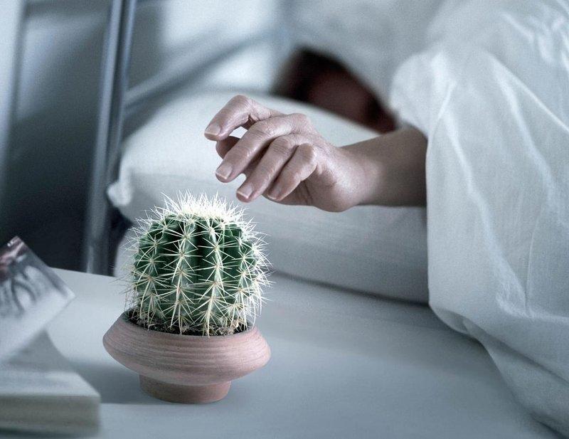 Кактус вместо будильника