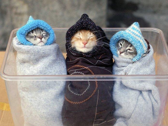 Смешные милые котята