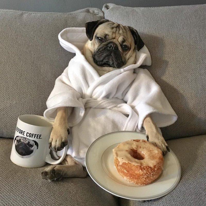 Собака и завтрак