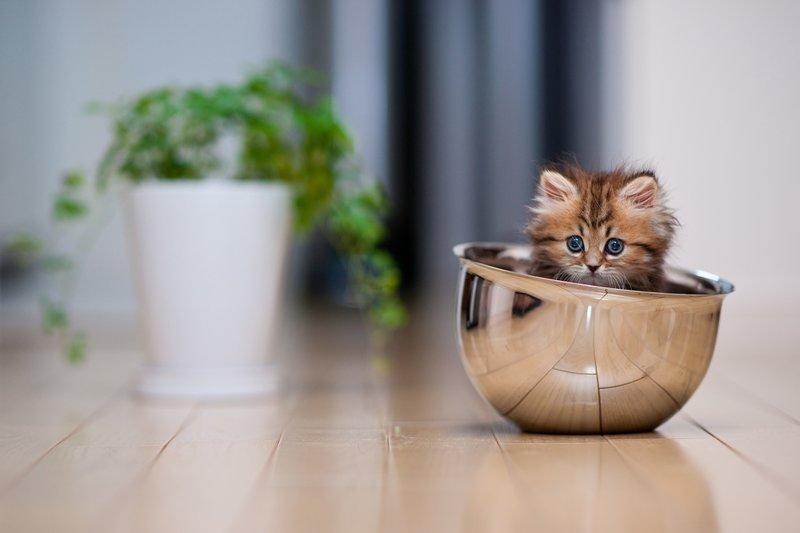 Котик в миске