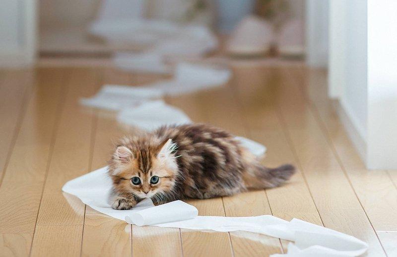 Котик играет с туалетной бумагой